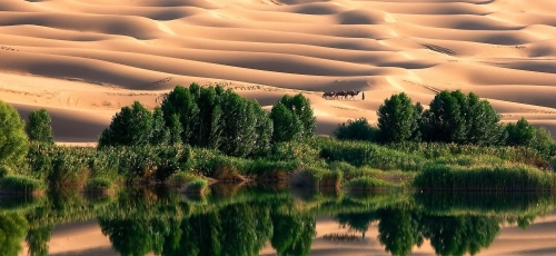 oasis-in-libyan-desert.jpg